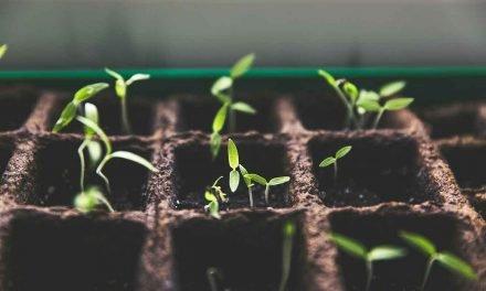 Eau de cuisson : une cure de minéraux pour vos plantes